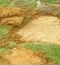 龙湾一安置小区<br>水泥地上种树