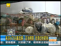 正当预防H7N9禽流感 无须过份紧张