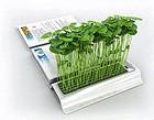创意农业蕴藏新商机