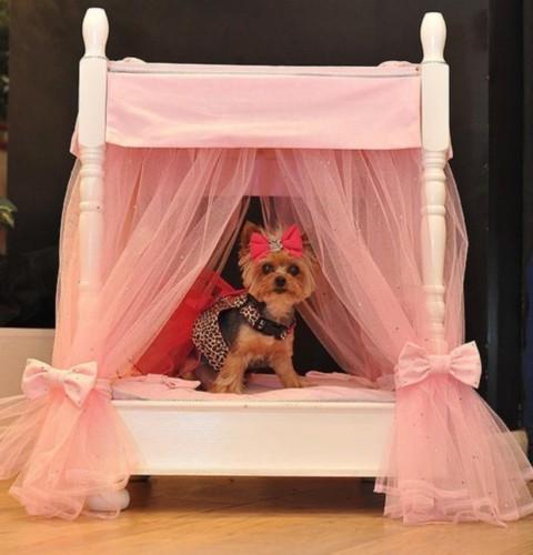 世界上生活最奢华的狗狗 - 喜洋洋 - 喜洋洋