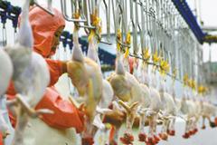 冰鲜禽商机冷冻食品企业想分羹