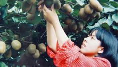 江山市少生快富项目点猕猴桃喜获丰收