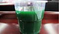 螺旋藻能吃新鲜的啦