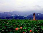 武义县柳城畲族镇
