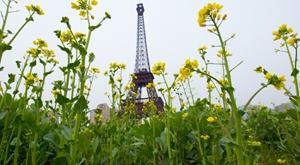 杭州山寨埃菲尔铁塔被油菜花包围
