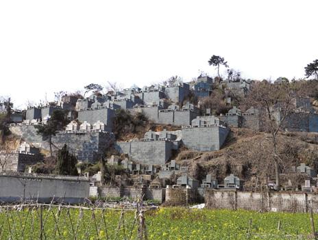 绍兴一村庄给山上墓群刷绿漆 绿化不合格扣分