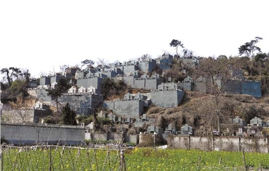 绍兴一村庄为完成复绿考核 给山上墓群刷绿漆