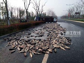 货车侧翻 7千斤大头鱼被晾在公路上