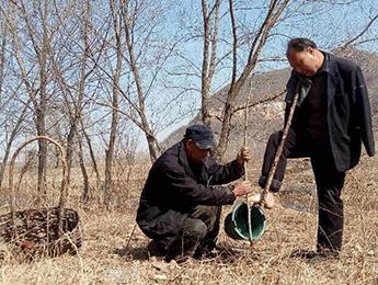 两残疾人互为手眼 十年植树上万棵