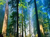 浙江森林年吸收二氧化碳6000万吨 好空气出天价