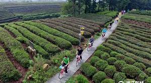 杭州:西山野趣 茶园骑游