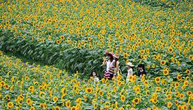 温岭:乡村六月花满垄