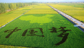 产出更多 浙江农业迈向高效生态