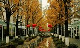 滨江浦沿街道