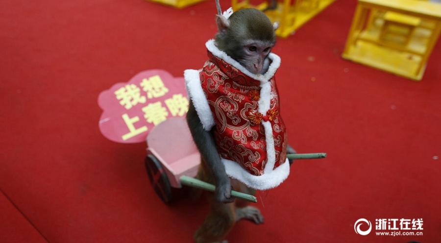 猴年未到 猴子们已忙晕