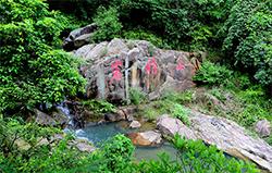 鹿城藤桥镇