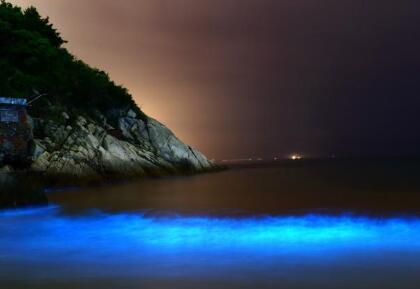 深圳海域现荧光海 专家称系夜光藻赤潮