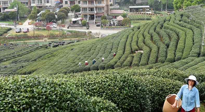 """杭州""""龙坞茶镇""""创特色小镇"""