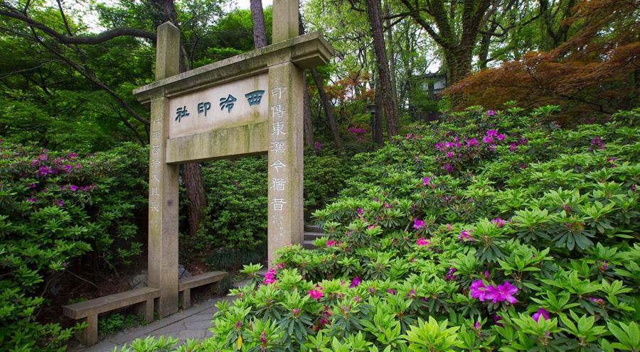 杭城孤山杜鹃将迎最佳观赏期