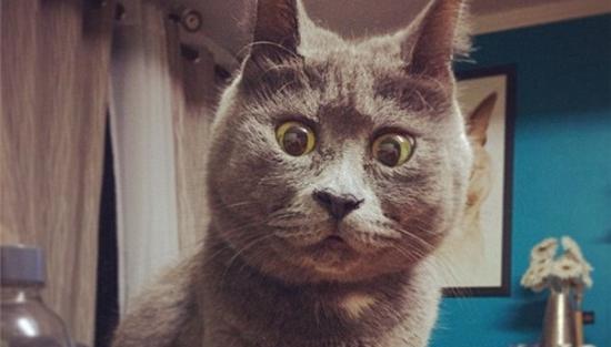 猫吃惊表情别具一格