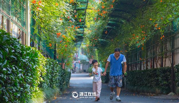 杭州一小区现200米凌霄花长廊