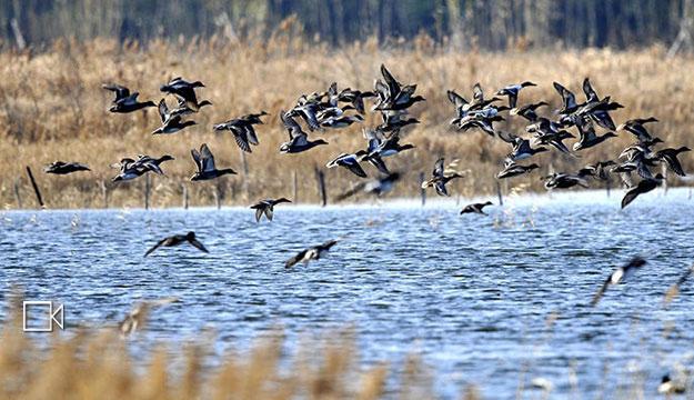 杭州湾湿地鸟类增加到220多种