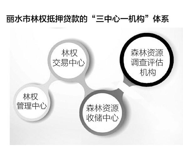 丽水活树变活钱:林权抵押累计放贷169.7亿 不