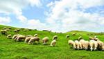 美丽生态牧场创建助推畜牧业转型升级