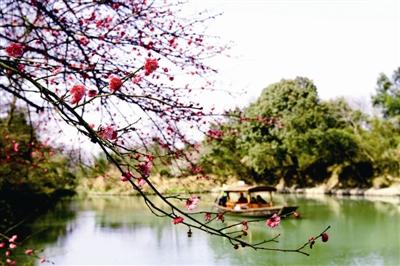 西溪湿地邀您曲水寻梅过大年-杭州新闻