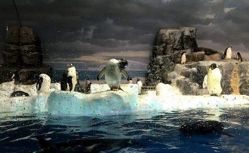 感受海洋生物魅力 满载收获传递环保正能量