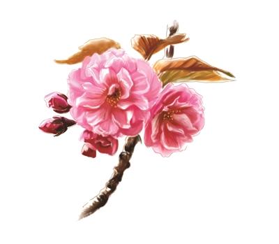 杭州的樱花越来越多 你还打算去日本赏樱吗?