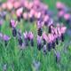 应对花粉过敏的7个妙招