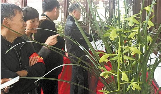 50多盆精品蕙兰亮相永康紫微园