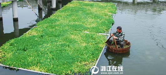 建德:护水队员 美化池塘