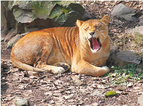 杭州动物园招4名大型动物饲养员 你想不想试试?