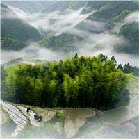 泰顺县之茶景点1