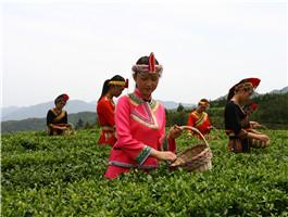 泰顺县之茶景点6