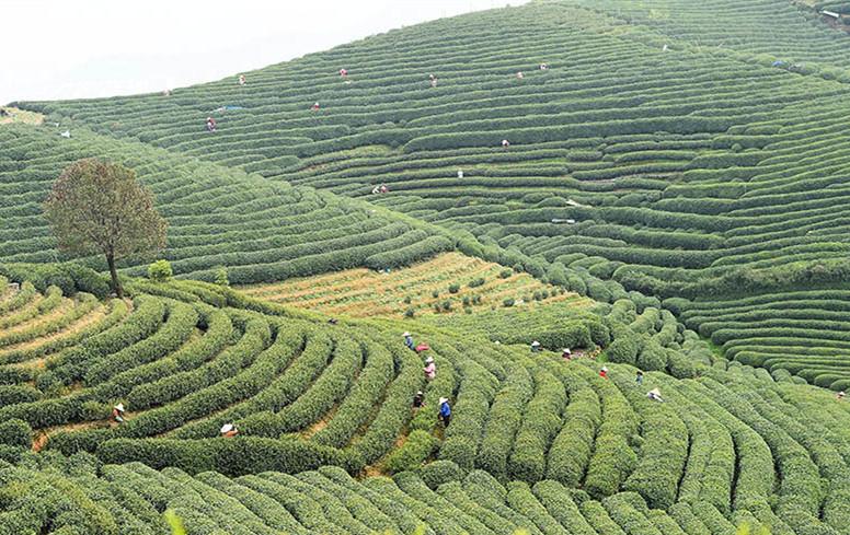 看规划如何引领杭州龙坞茶镇转型升级
