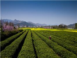 开化县之茶景点