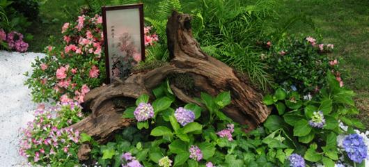 万松书院荫生植物展邀你赏苔藓