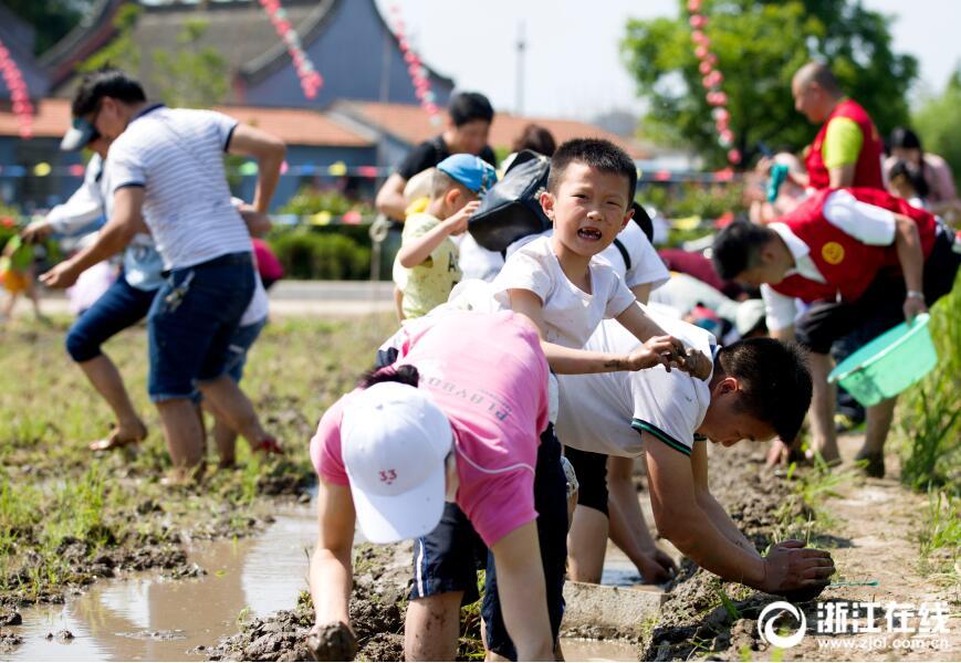 """作,乐在端午""""活动,来自辖区的百名小朋友通过学插秧、抓泥鳅"""