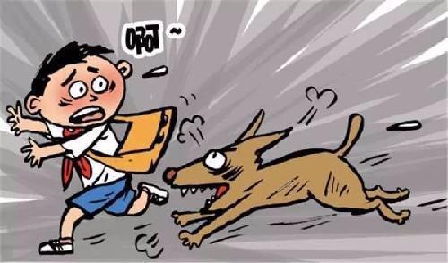 高温天宠物易烦躁 嘉兴犬伤门诊一天超80例