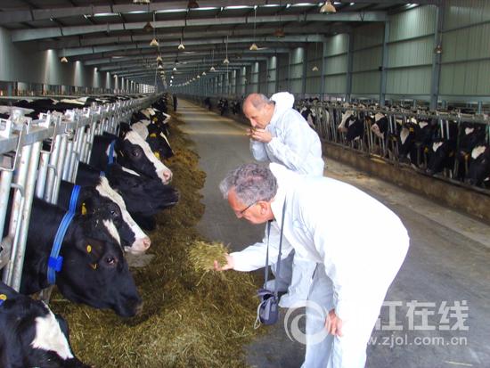 把牛养好 一景乳业要做一杯高品质牛奶