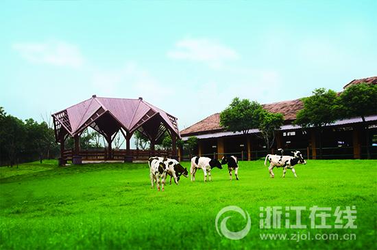 陪伴杭州人60年的美丽健 以美丽牧场产优质牛奶