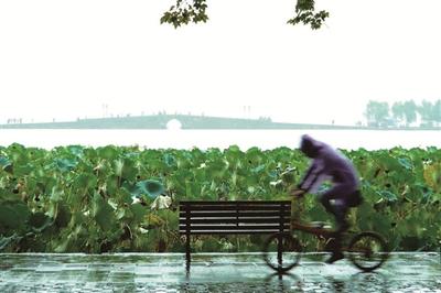 秋风秋雨秋渐浓 杭州本周一至周三最高温度不到20℃