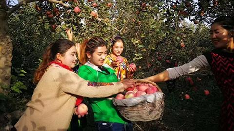 阿克苏的苹果红了 浙江援疆人的心儿醉了