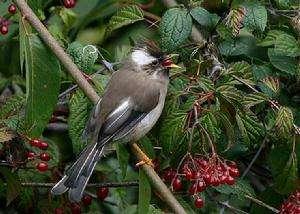 绍兴发现北欧鸟类白领姬 此前国内从未发现