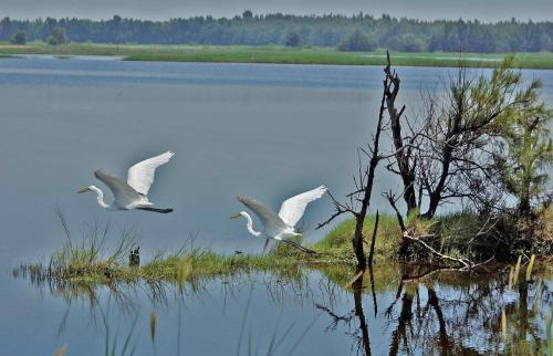 160余只迁徙冬候鸟命丧平阳 森林公安抓获两盗猎者
