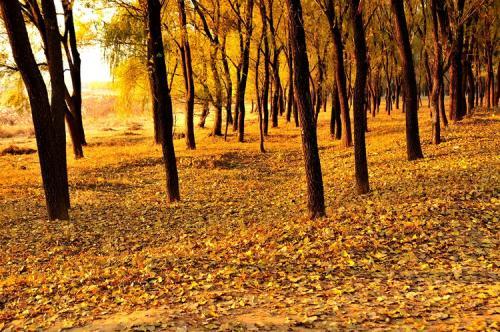 本周甬城气温波动大 深秋的脚步越来越近