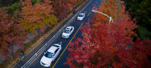 """红叶季!杭州这条特色大道""""枫""""景美如画"""